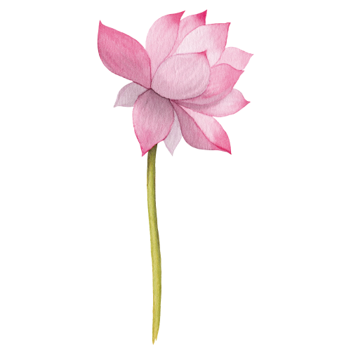 —Pngtree—illustration lotus watercolor hand painted_3809152